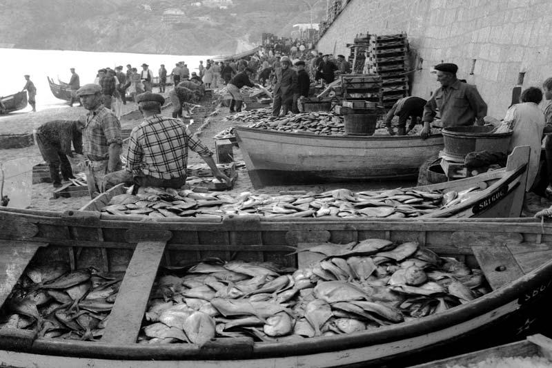 Restaurantes Sesimbra peixes